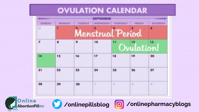 from-menstrual-period-to-ovulation